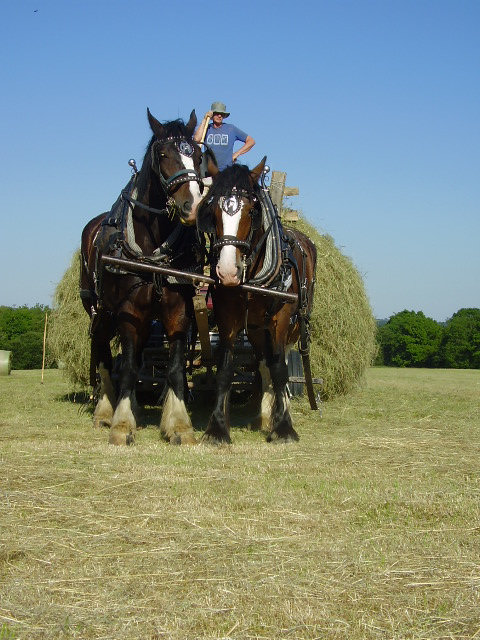 Shire Horses Farm Life Woodland Craft Devon