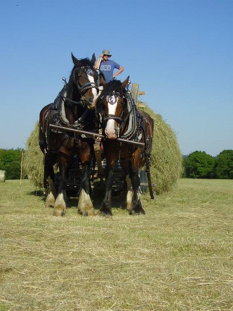 Shire horses farm life woodland craft devon