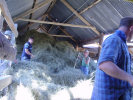 in the hay loft