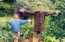 Ornamental Scarecrows