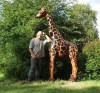 A magnificent carved wooden giraffe, standing taller than a man!!Ben has placed this fine fellow next to a tree where he is happily chewing the upper branches.Ben is happy to discuss creating a unique commission if there is a certain animal you would like made.''Dear Ben I know I said it more than once but thankyou again for my really wonderful addition to our school. He is so much better than I could ever imagined and I cannot wait to see the ex....